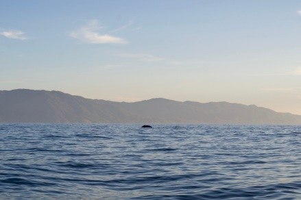PPJ1_Whale