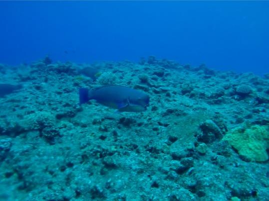 UnderwaterNiue2